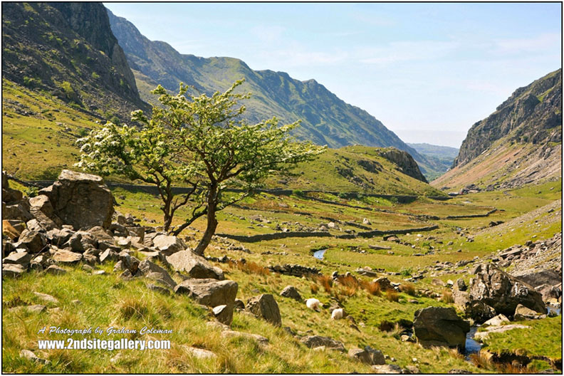 a sunny view of the Llanberis pass in Snowdonia, a small mountain stream and hawthorn trees against a backdrop of rocky cliffs and distant mountains a