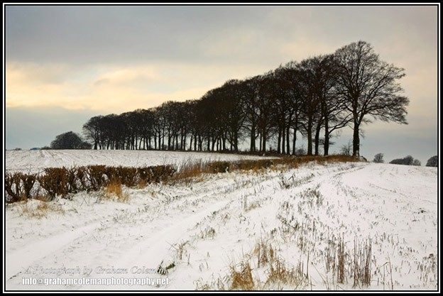 Row of Beach Trees in the snow a winter view of the Cotswold landscape by Graham Coleman.