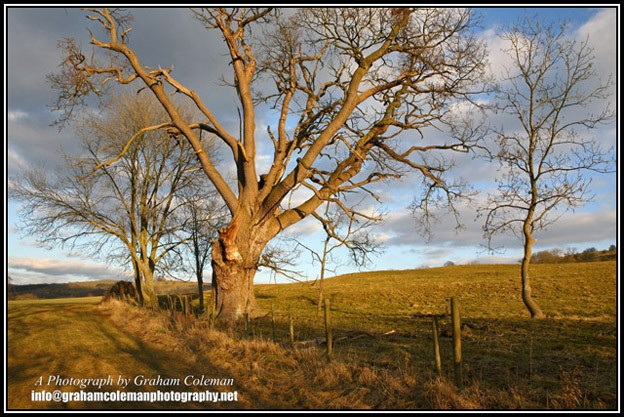 trees in evening light on the cotswold way