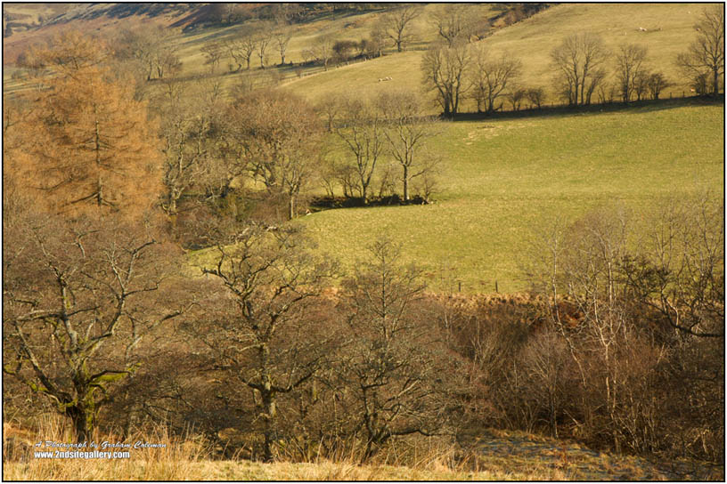 Trees and fields near Hay on Wye