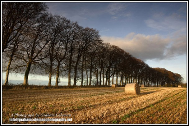 Hay Bales and Beech Trees - a cotswold landscape