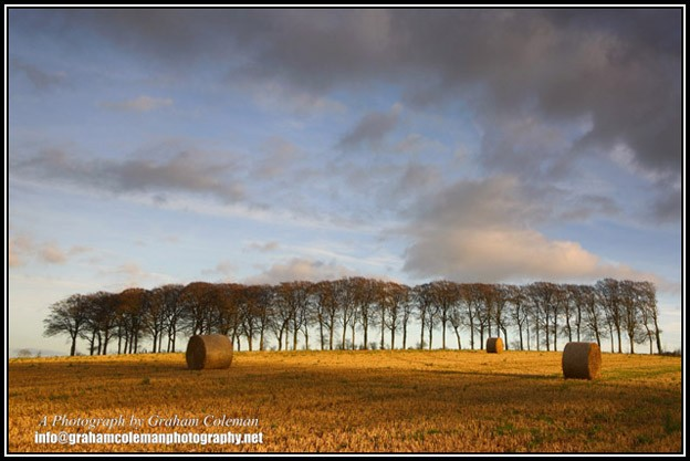 beech trees and hay bales with dramatic sky , beautiful pictures of the Cotswolds
